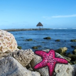 Starfish - Medium: Photo plus art marker and paint markers)